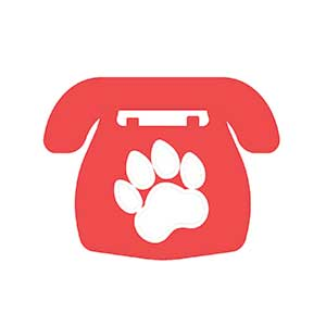 Contact the team at the UK's leading pet transport company